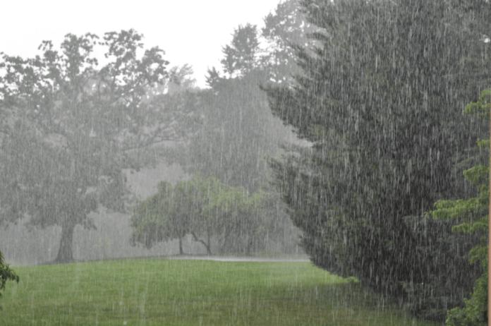 27 Manfaat Air Hujan Yang Baik Bagi Kehidupan Alam Raya Seruni Id