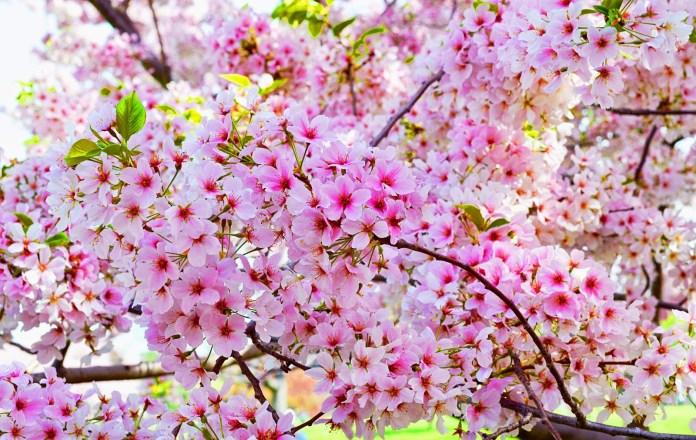 9 Bunga Cantik Berasal Dari Sedotan Plastik Bekas Dan Cara Membuatnya Seruni Id