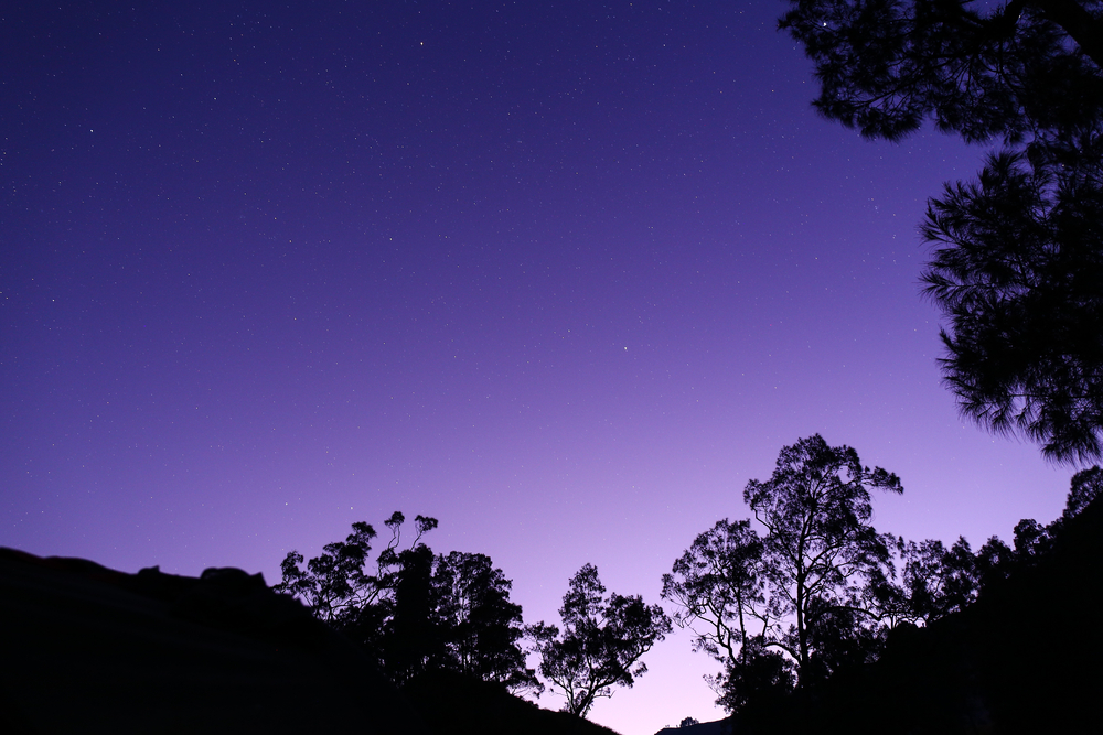 shadows of trees at dawn on a purple sky