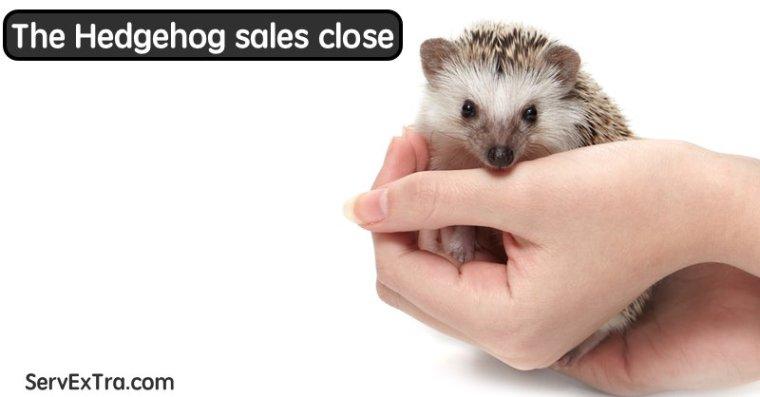 Hedgehog sales close