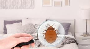 Piqûres de punaises de lit symptômes et traitement