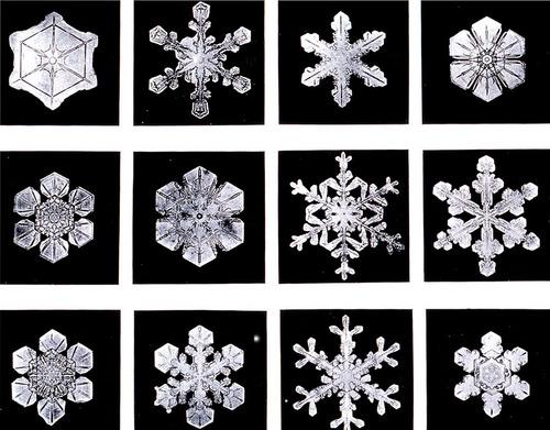 Wilson Bentley snowflakes