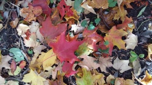 beauty of fall leaves