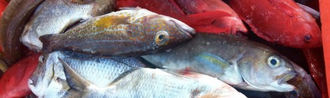 Bringing complexity to science communication - The case of fish trade