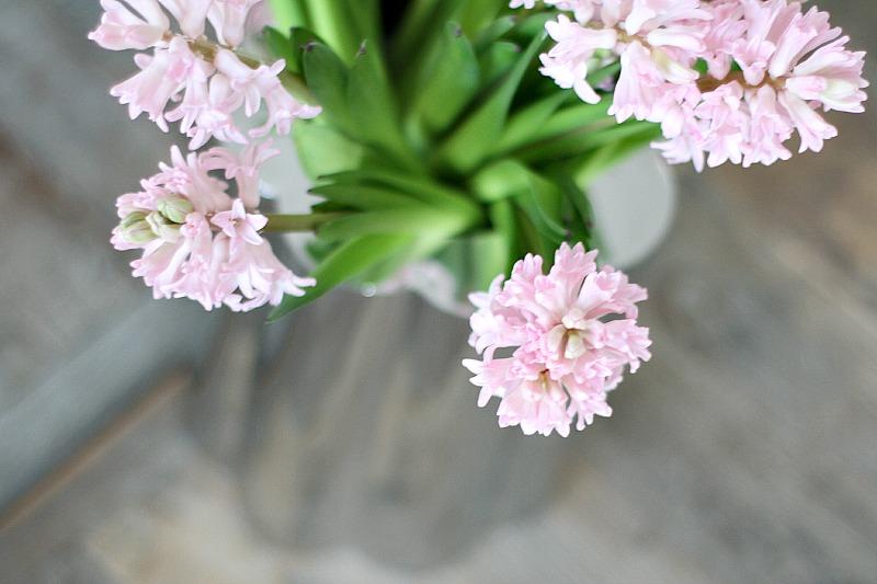 hyacinter_svibler