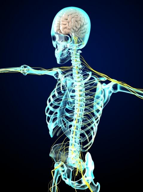 人工膝関節置換術と神経障害