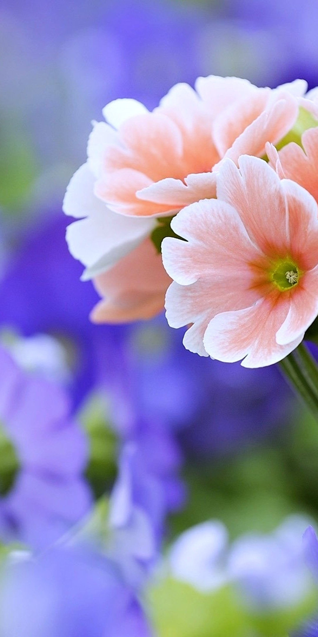 Beautiful Flowers Wallpaper  1080x2160  Beautiful Flowers Wallpaper 1080x2160 768x1536