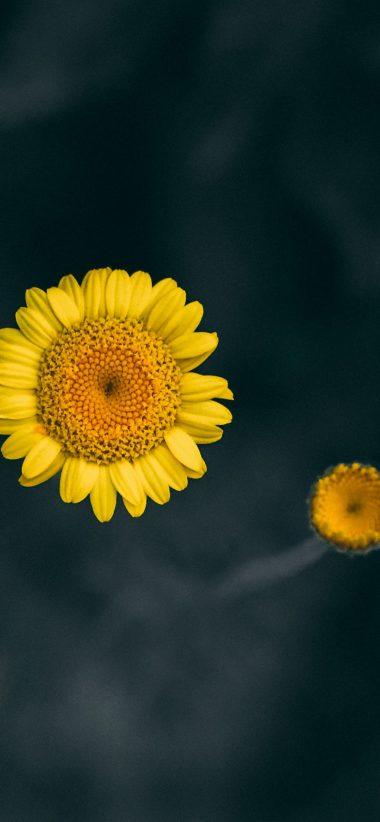 Sunflower Wallpaper Iphone Xs Max | Best Flower Site