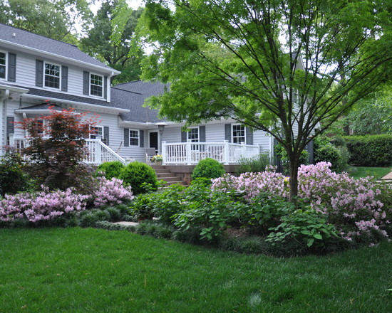 Rejuvenated Backyard