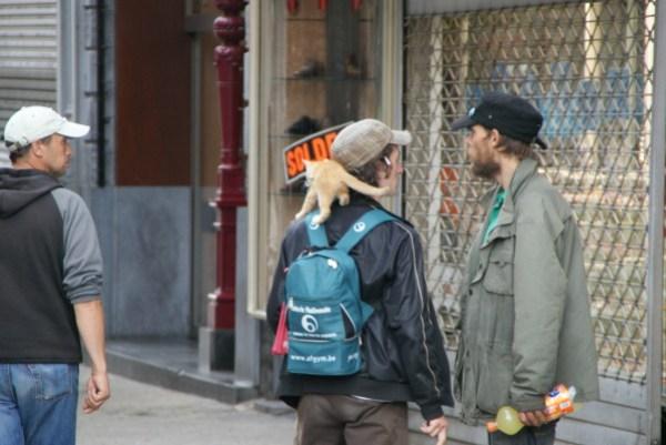 blog voyage australie whv backpacker roadtrip cat gato neko chat katze shoulder épaule hobbo sdf cute mignon
