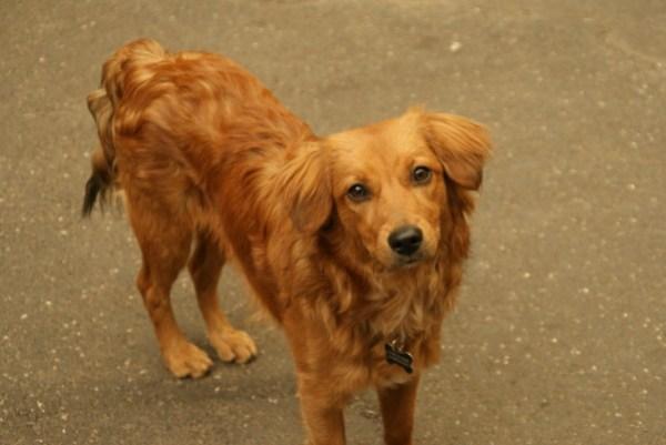 blog voyage australie whv roadtrip italie dog cute chien mignon
