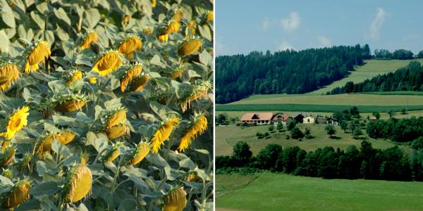 blog voyage australie whv sunflower landscape travel austria