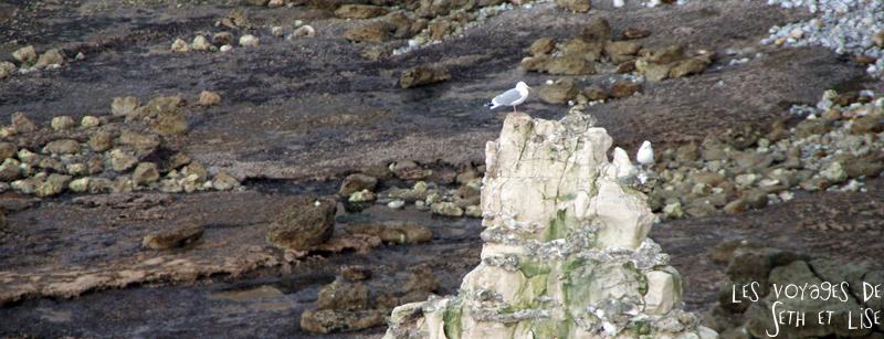 blog goeland falaise etretat voyage