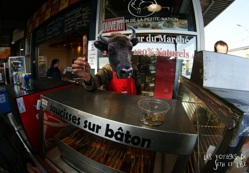 blog pvt canada montreal pvtistes couple tour du monde voyage bison funny