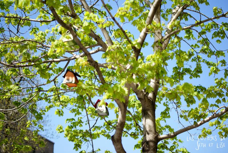 blog pvt canada montreal voyage maison kawaii oiseau arbre sherbrooke