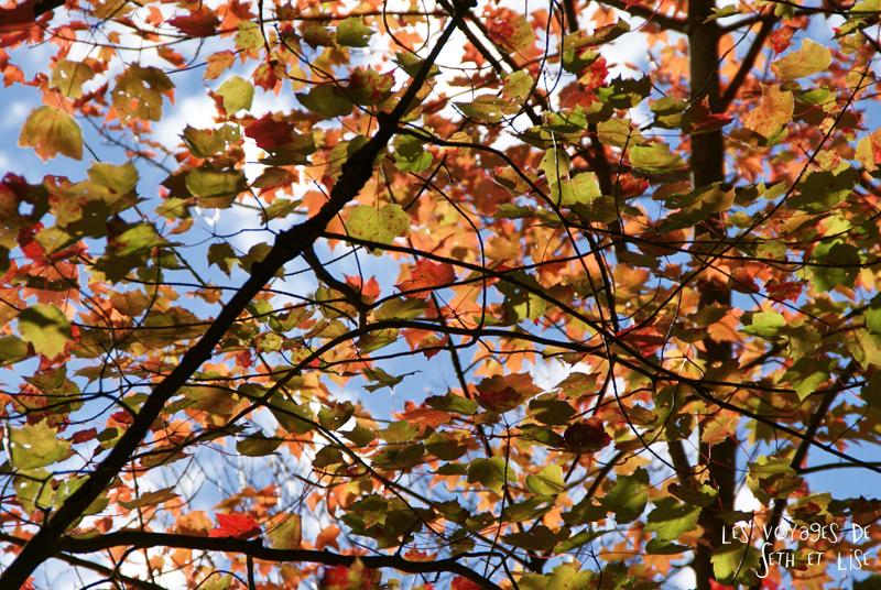 blog pvt canada pvtiste quebec mont orford parc photgraphie voyage couple ete indien summer indian couleur colors nature tour du monde feuille erable