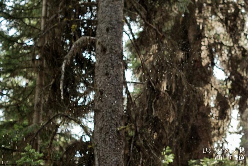 blog pvt photographie pvtiste canada alberta rocheuses rockies moutains voyage montagne couple tour du monde nature parc national lac lake rain rockies