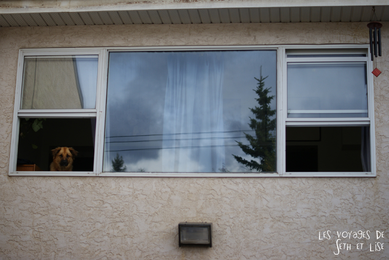 blog pvt pvtiste voyage photo photographie couple tour du monde canada japser rockies alberta rocky mountain vintage ville urban creepydog chien fenetre