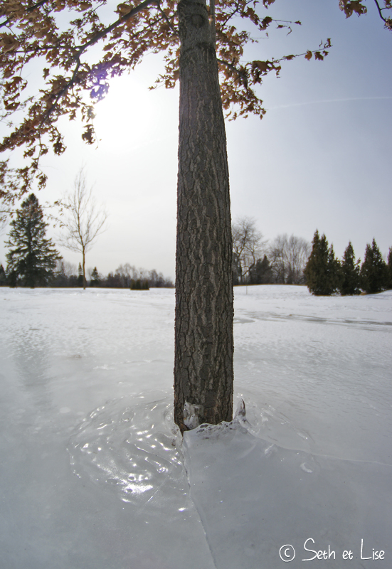 blog pvt canada montreal hiver glace printemps blanc photographie seth lise arbre