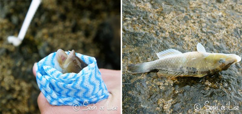 blog voyage nz zelande wellington photo film fish