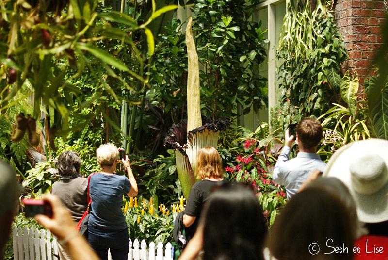 Jardin botanique d'Auckland