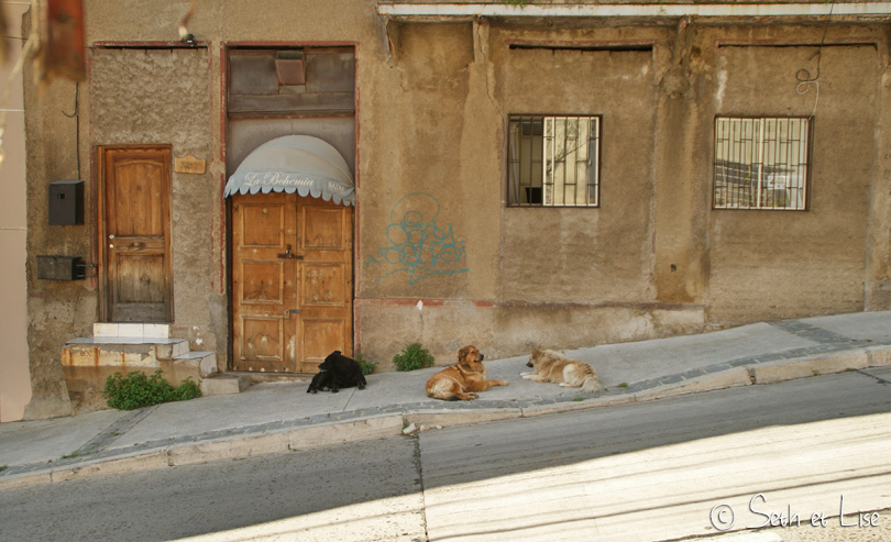 dogs valparaiso