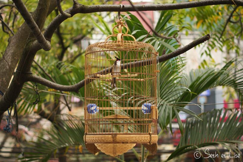 oiseau chanteur vietnam