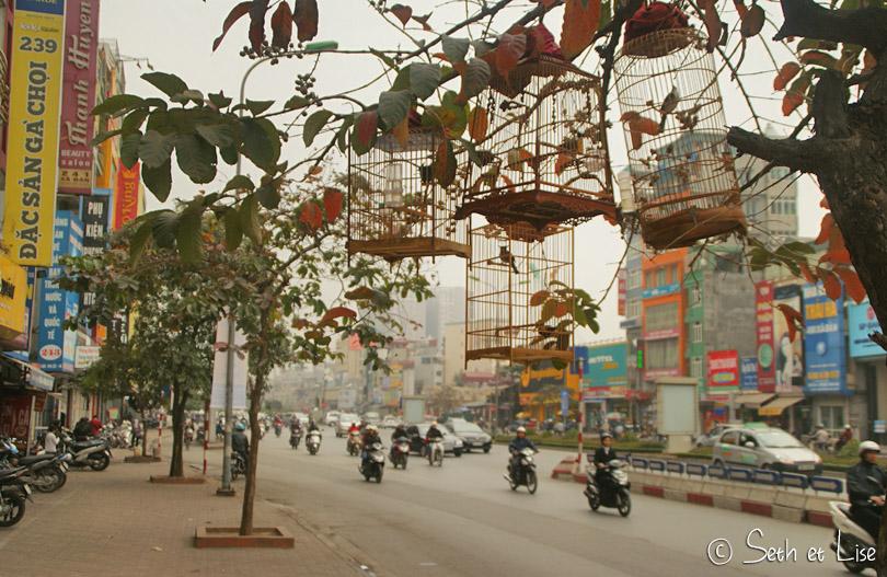 vietnam bird cage