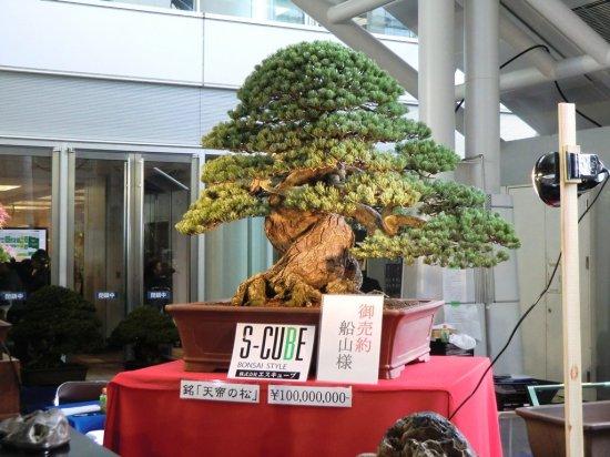 Most expensive bonsai in the world in Takamatsu, Japan - November 2011