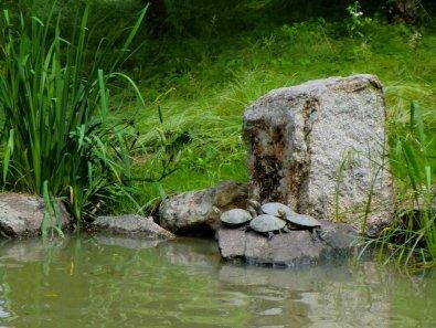 Kibitsuhiko Jinja - Turtles