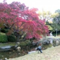 Ritsurin Park in the Fall