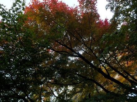 Ritsurin Garden - Late November - 23