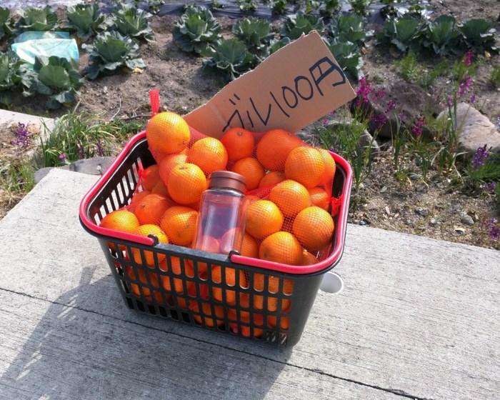 22 - Oranges