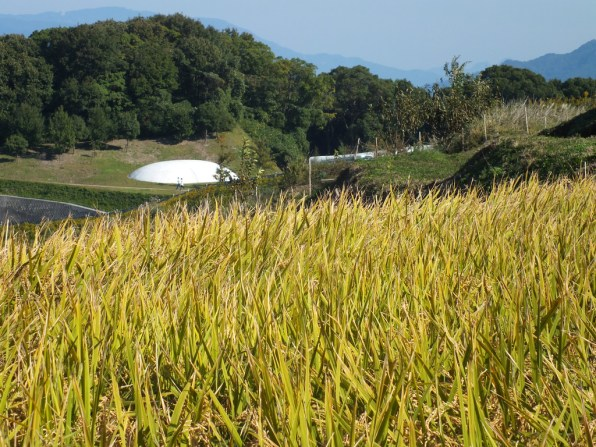 Harvest Festival and Seppuku Pistols on Teshima - 10
