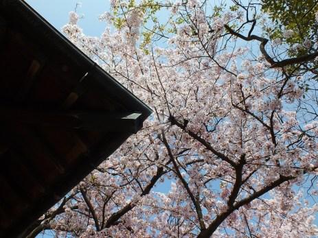 Ogijima - April 2018 - 7
