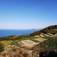 Tour de Teshima