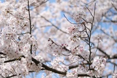 Ogijima - April 9-23 2019 - 13