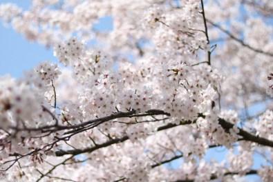 Ogijima - April 9-23 2019 - 15