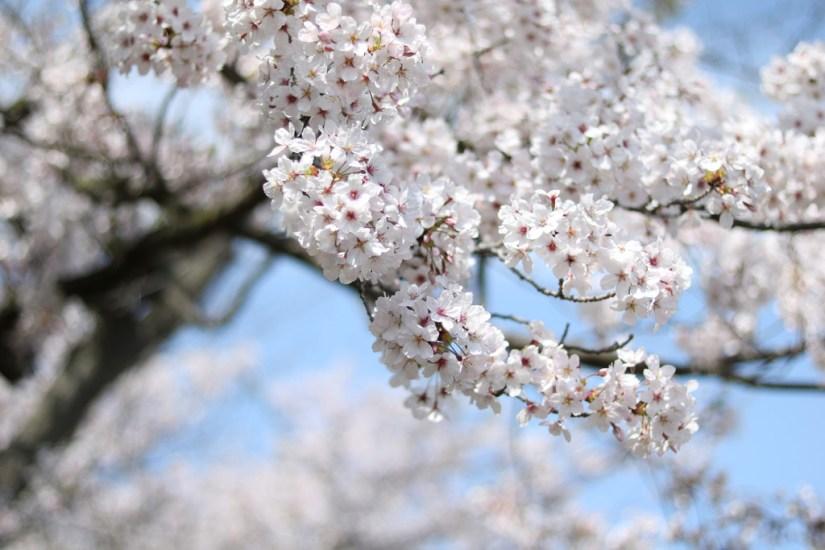 Ogijima - April 9-23 2019 - 18