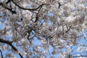 Ogijima - April 9-23 2019 - 20