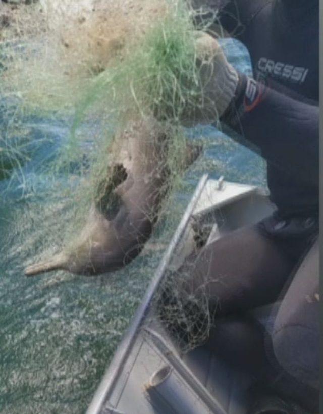 golfinho-resgate-frame3