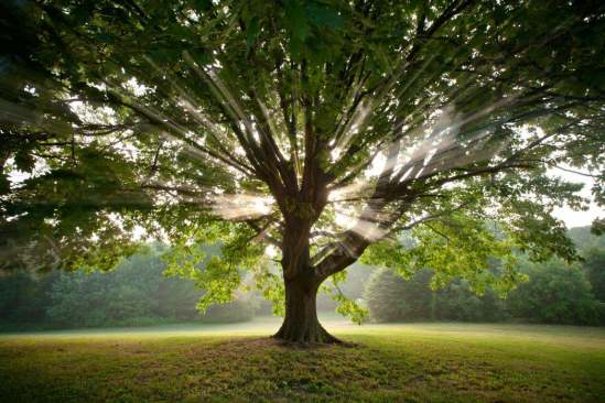 Bajo un árbol jóvenes tienen sexo