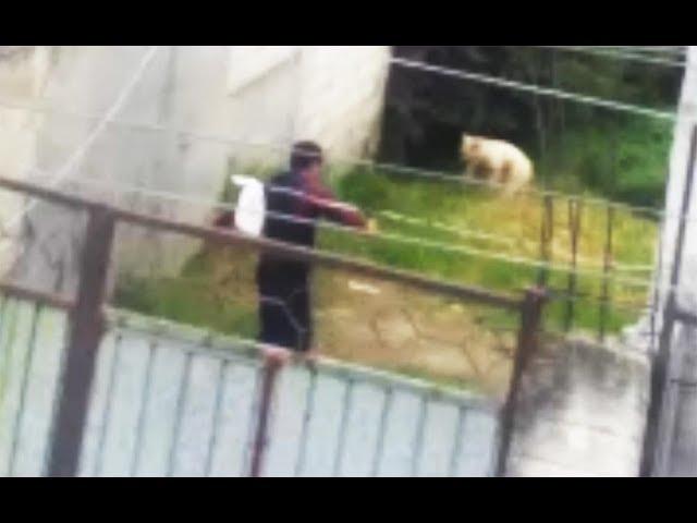 """matan"" a perro en Toluca, denuncian (VIDEO)"