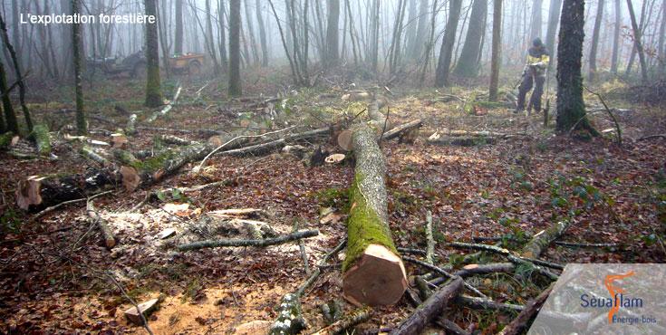 Exploitation du bois de chauffage en forêt | Sèvaflam - Bois de chauffage sur palette