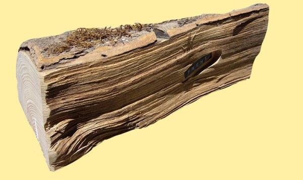 Essence de frêne | Sèvaflam - Bois de chauffage sur palette