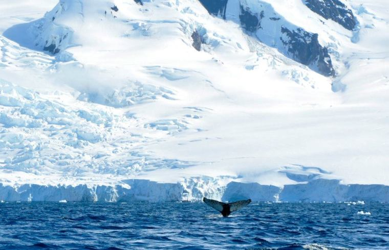 Whales playing in Antarctica