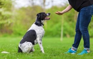 Curso de Adestramento de Cães do Cursos 24 Horas – Qual salário de um Adestrador?