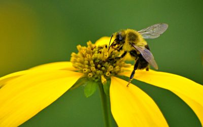 Virtual Conference 2021: Restored to Bee on Purpose