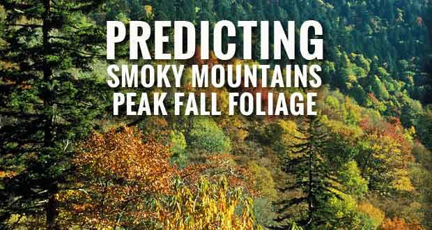 Fall foliage peak in the Great Smoky Mountains