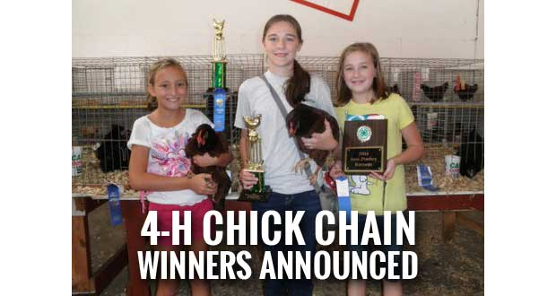 2014 Sevier County 4-H Chick Chain Winners Announced